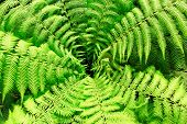 green fern leaves from above