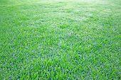 Grre Grass