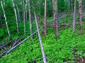 Northwoods Michigan Forest Landscape