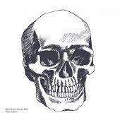 Vintage ethnic hand drawn human skull