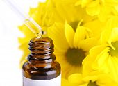 Dropper bottle of perfume with yellow chamomile on white background