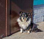 stock photo of stray dog  - Stray dog at the closed door - JPG