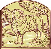 stock photo of pastures  - Etching engraving handmade style illustration of a sheep facing front with pasture and trees in the background set inside crest - JPG