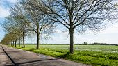 picture of row trees  - Country road with bare and newly budding trees in a long row along a field with fresh green grass in the spring season - JPG