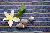 image of plumeria flower  - Plumeria Flower with pebbles on a blue background - JPG