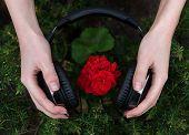 picture of geranium  - red geranium listening to music from headphones - JPG