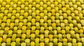 foto of corn  - background of peas and corn laid by hand - JPG