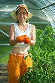 Woman With Tomato  Hothouse