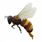 Bee - Insect