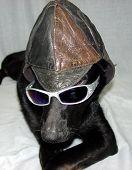 Funny Dog Hat Glasses
