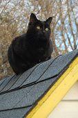 Rooftop Cat