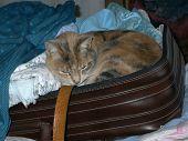 Pack Cat 2