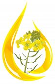 Mustard Oil. Stylized Drop Of Oil And Mustard Flower.