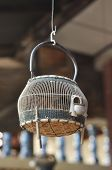 Francolin Bird Birdcage Wood Hang Thailand