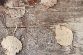 Autumn Leaves With Frost On Wooden Desk poster