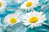 Margarida flores em pedras de vidro azul