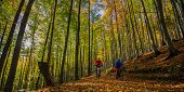 Cycling couple on cycle trail in autumn forest. Mountain biking in autumn landscape forest. Man and  poster