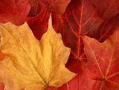 Fall  Leaves Horizontal