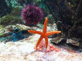 Colorful Starfish and Urchin