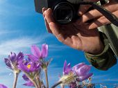 Photographer taking image of blooming wildflowers