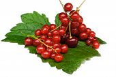 Currant And Cherry