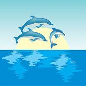 Golfinhos em Sunrise
