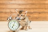 Retro Alarm Clock That Shows 7 Oclock And A Kitten Of The Bengal Breed poster
