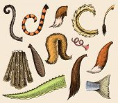 Animal Tail Animalistic Tailed Breast With Furry Feathers Of Limb Illustration Of Tailend Brush Set  poster