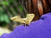 Moth On Shoulder