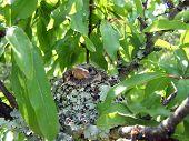 Small Baby Bird