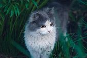 Beautiful Cat Portrait With Yellow Eyes poster