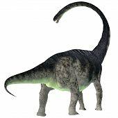 Omeisaurus Dinosaur Tail 3d Illustration - Omeisaurus Was A Herbivorous Sauropod Dinosaur That Lived poster