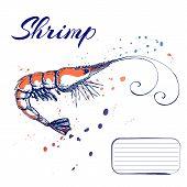 Ink Hand Drawn Shrimp Or Prawn Concept For Decoration Or Design. Ink Spattered Shrimp Illustration.  poster