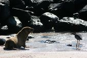 Sea Lion And A Bird, Galapagos