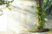 Palm Fog Light Farm Day Outdoor