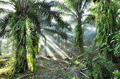 Palm Light Fog Day Outdoor Farm