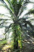Palm Light Outdoor Fog Farm Day