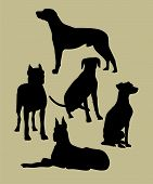 picture of bull-mastiff  - the set of silhouette of different dogs - JPG