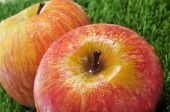closeup of some delicious and fresh red apples on the grass