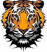 Cabeza de tigre Vector Graphic