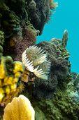 arrecife de coral con gusanos plumero en el fondo del mar tropical