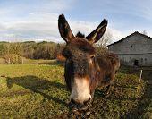 Closeup On A Head Of A Donkey