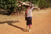 A Woman While Carrying Firewood On Their Heads - Tanzania - Africa