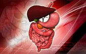 pic of intestines  - Digital illustration of human digestive system in colour background - JPG