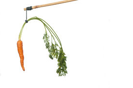 stock photo of dangling a carrot  - dangle a carrot on a stick as an incentive - JPG