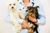 Veterinary treatment - lovely puppies and friendly veterinary, veterinary care concept