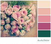 A background pale pink rosebuds in a colour palette,  with complimentary colour swatches. Textured r