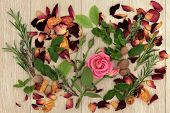 Herb and rose flower ingredients  used in magical love potions and alternative medicine over oak wood  background.