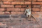 Monkeys Of Thailand