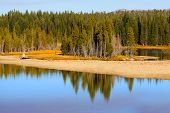 Reflection of trees in the river in Yellowstone national park